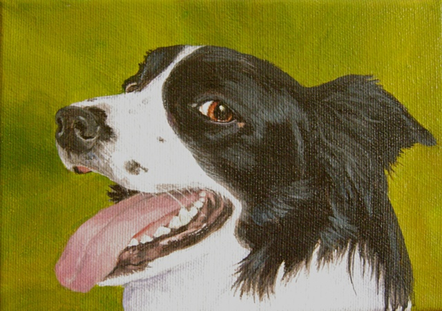 sue betanzos, border collie painting, dog painting, pet painting, pet portrait paianting, contemporary dog painting, flyball, agility, dog agility, dog flyballl