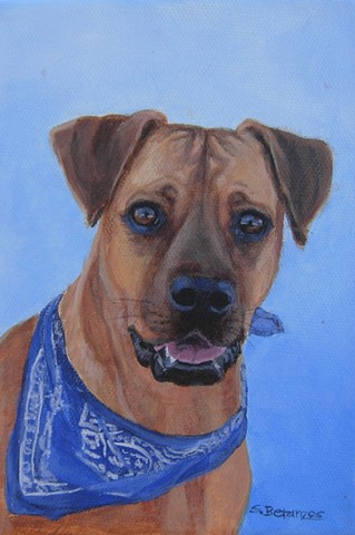 sue betanzos, Blue, dog, australian shepherd, pet, animal, canine, pet portrait, memorial, violet