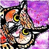 perplexed owl