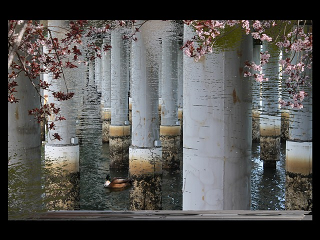 Water columns flowers duck