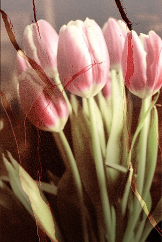 Tulips
