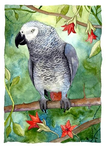 Nioka the African Grey parrot