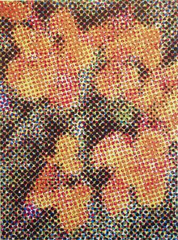 Antirrhinum (Floral carpet)