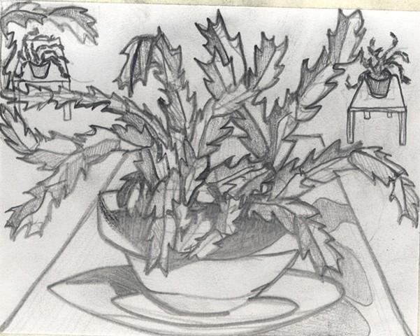 Zygocactus