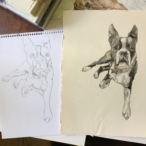 French Bulldog Dog Pet Portraits by Atlanta Artist Katherine Bell McClure