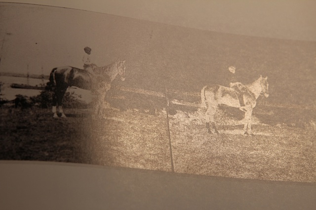 Civil War Horse