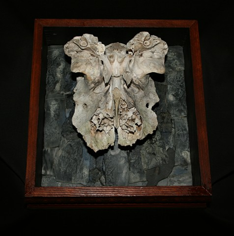 Mixed Media assemblage sculpture with bone, wood and anthracite coal remnants.