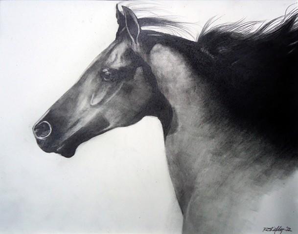 ArabianNight
