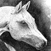 HorseHeadStudy