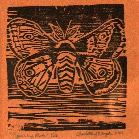 Tiger's Eye Moth