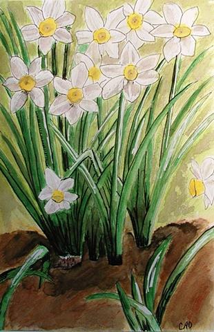 Daffodils: Spring