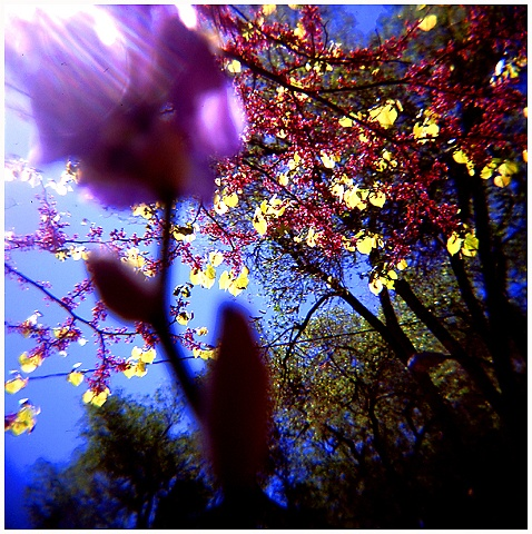 flowers, blooms, lomography, Crystal Shelton