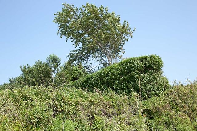 Shelter Island, landscape, trees