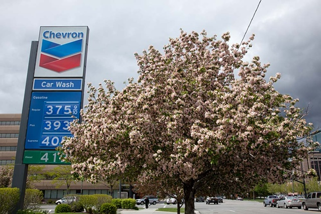 Salt Lake City, Utah, tree, sign, gas station