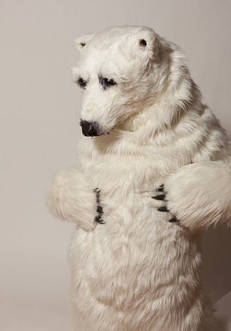 Polar Bear. Photo by Benjamin Heller.