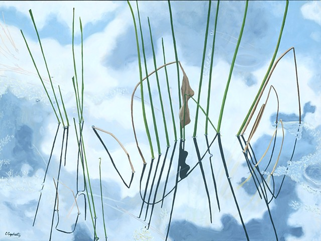 Northwood Pond Grasses 4