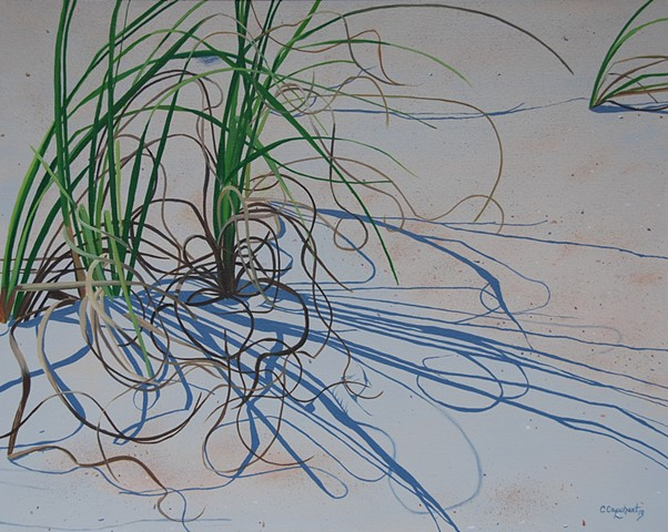 St Augustine beach grasses swirling in the sand with cool shadows.