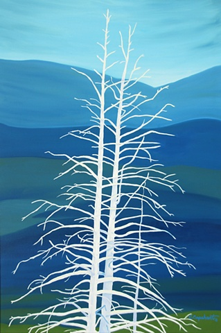 Ghost Trees of Yellowstone