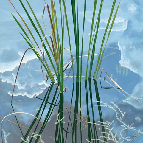 Pond grasses with reflection and reflected sky