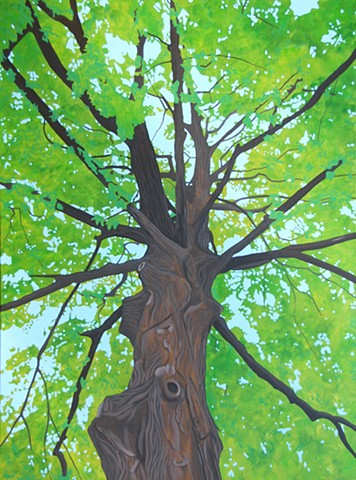 Oak Tree, looking up through the branches