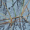 Lake Eustis Grasses 1