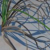 Beach Grasses II