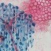 Fuyuu Blue Rain, II