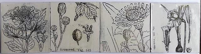 717. Botanical tiles 14x14 cm