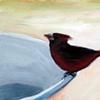 Back Yard Cardinal