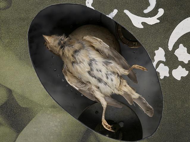 Aviary (DETAIL)
