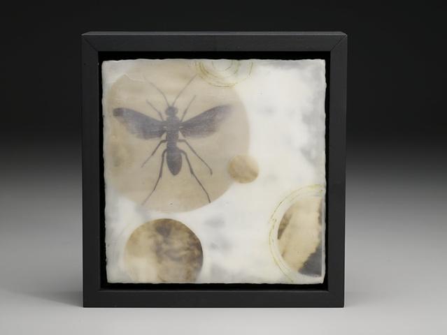 Entomologies (DETAIL)