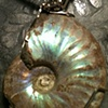 ammonite in sterling silver