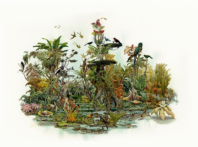 Ben Blatt Limited Edition Print Tropic Tortuguero Bird Flora Fauna Botanical