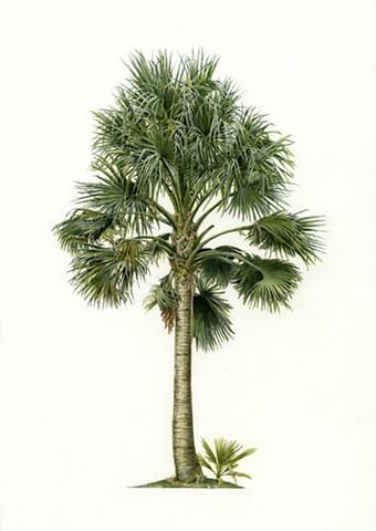botanical, flora, fauna, watercolor, classic, traditional, scientific, illustration, flower, leaf, succulent, palm, cactus, detail, green, tropical