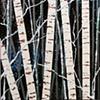 """SOLD Winter Woods 12""""x12"""""""