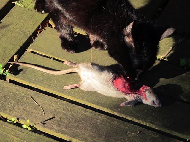 Bagheera and the Rat