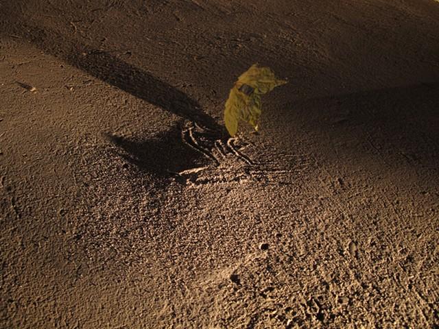 Leaves, Sivan Eldar Ash Mounds, Anna Adler Detail