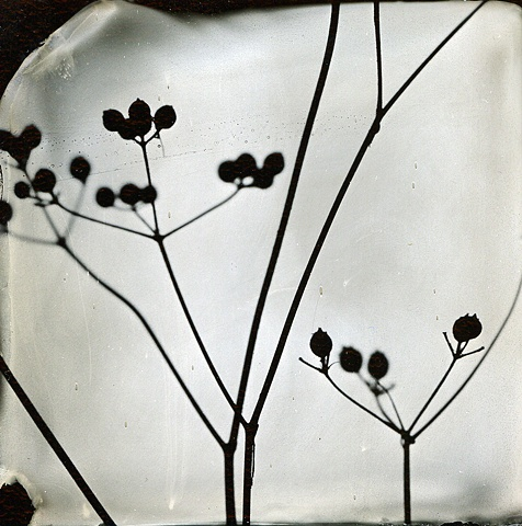 photogram, wet-plate collodion