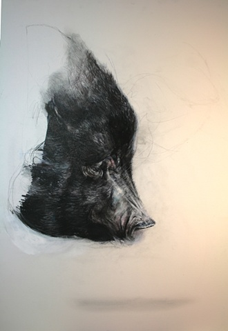 pig, painting, drawing, animals, contemporary, realism