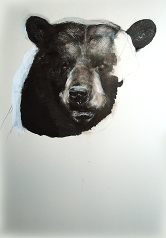 bear, drawing, contemporary drawing, realism