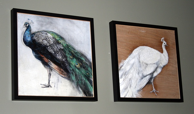 peacocks, painting, drawing, animals, detailed, contemporary