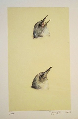bird, animal drawing, bird drawing, realistic nature art, contemporary drawing