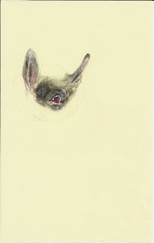bat, drawing, realism, magical realism, contemporary, anti-narrative