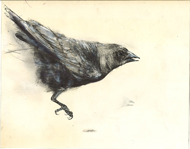bird, drawing, detailed, dark