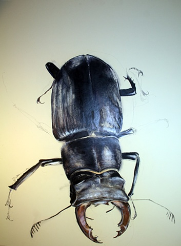 big beetle drawing nature realism