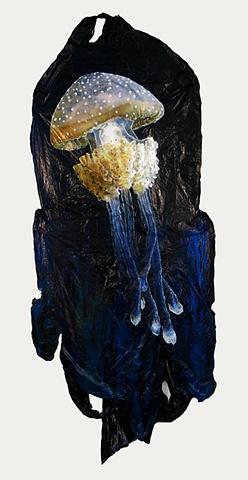 Phyllorhiza Punctata Jellyfish