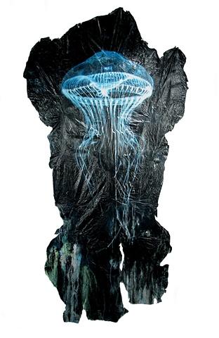 Crystal Jellyfish
