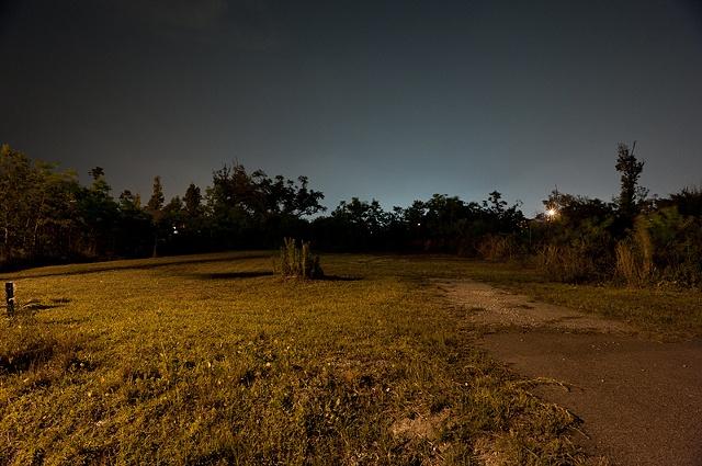 Bush on empty lot in Waveland, MS