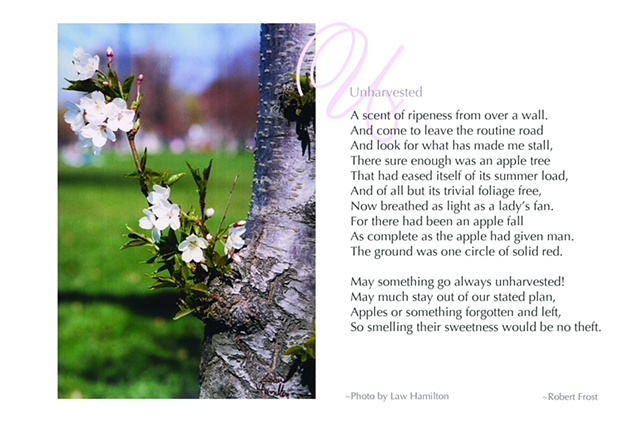 """Poetry of the Tree"" book spread"