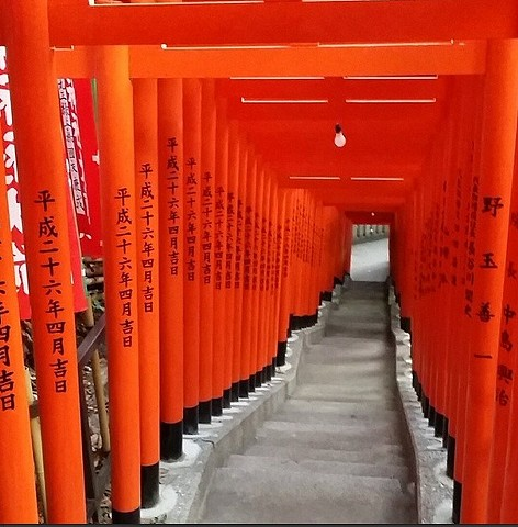 Stumbled onto some beautiful 'inari' gates today